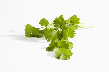 Coriander Herb On White Background,Close Up LANG_EVOIMAGES