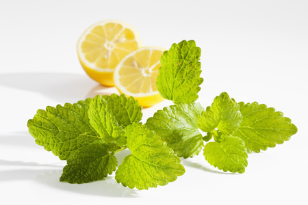 Lemon Balm On White Background,Close Up LANG_EVOIMAGES