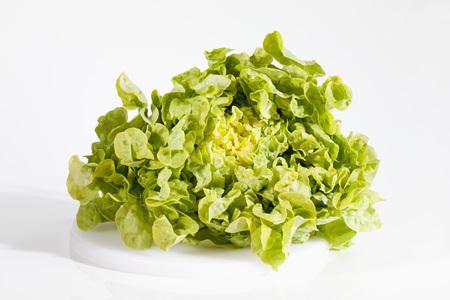 Oak Leaf Lettuce On White Background,Close Up