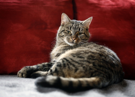 Germany,Baden Wuerttemberg,Cat relaxing on couch