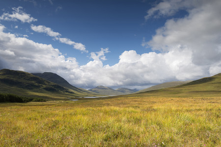 Scotland,United Kingdom,View of Heathland at Northwest Highlands LANG_EVOIMAGES