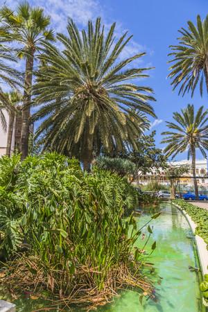 Spain,Las Palmas,View of palm trees