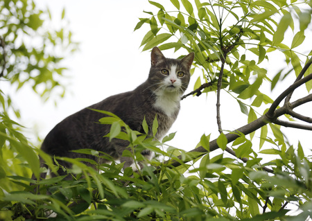 Germany,Baden Wuerttemberg,Cat climbing on branch,close up LANG_EVOIMAGES