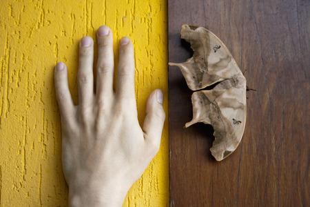 Brazil,Butterfly on wooden wall besides human hand
