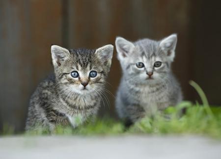 Germany,Baden Wuerttemberg,Kittens sitting in front of door