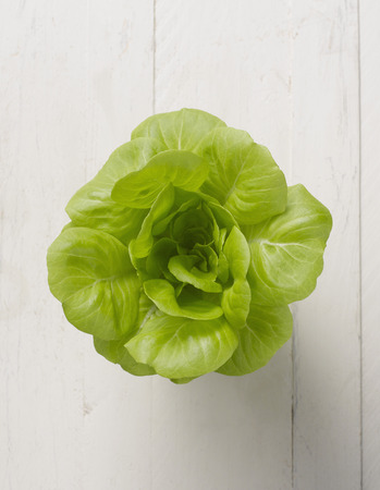 Butterhead lettuce on white background,close up