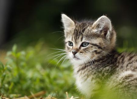 Germany,Baden Wuerttermberg,Kitten looking away LANG_EVOIMAGES