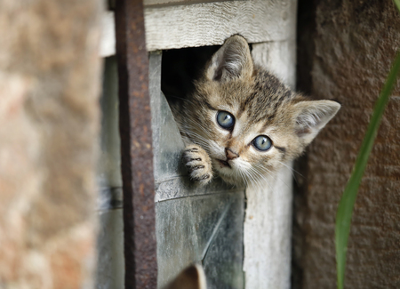 Germany,Baden Wuerttemberg,Kitten looking out of broken window