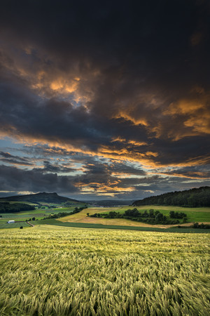 Germany,Baden Wuerttemberg,Constance,View of wheat field in sunset