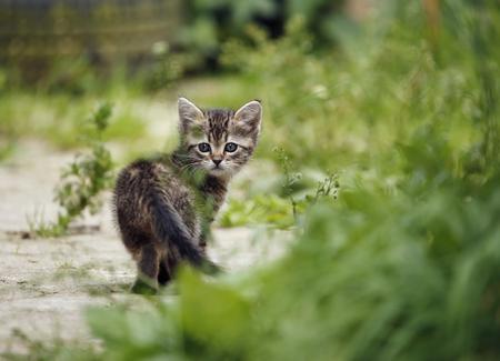 Germany,Baden Wuerttermberg,Kitten walking