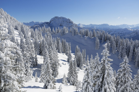 Germany,Bavaria,Snow covered spruces at Tegelberg Mountain