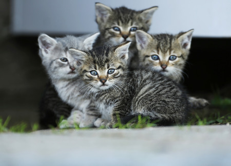 Germany,Baden Wuerttemberg,Four Kitten sitting,close up