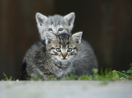 Germany,Baden Wuerttemberg,Kittens sitting,close up LANG_EVOIMAGES