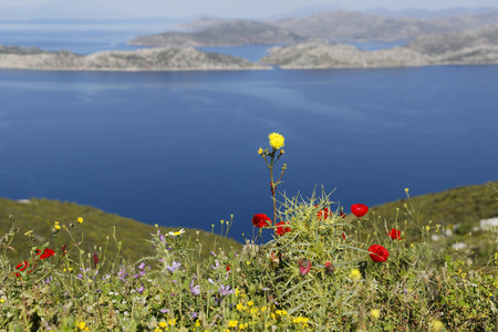 Turkey,View of flowers at coast LANG_EVOIMAGES