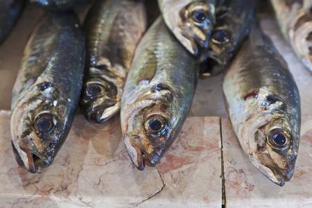 Portugal,Lagos,Horse mackerel fish LANG_EVOIMAGES
