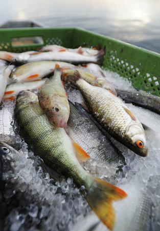 Germany,Bavaria,Fresh fish on fishing boat at Lake Starnberg