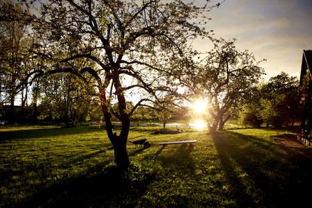 Germany,Schleswig Holstein,View of garden at sunset