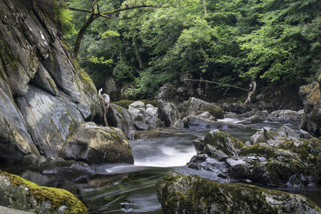 Great Britian,Wales,Betws-y-Coed,canyon Fairy Glen at Snowdonia-National Park
