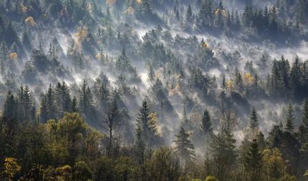 Germany,Bavaria,Upper Bavaria,Icking,Pupplinger Au,forest