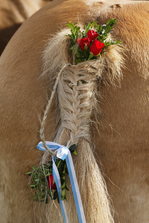 Germany,Upper Bavaria,Wildsteig,Horse tail decorated for Leonhardi prcession