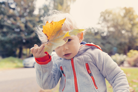 Germany,Bonn,Baby boy covering face with  autumnal leaf i