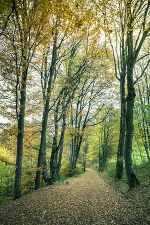 Germany,Baden Wuerttemberg,Zollernalbkreis,forest path in autumn