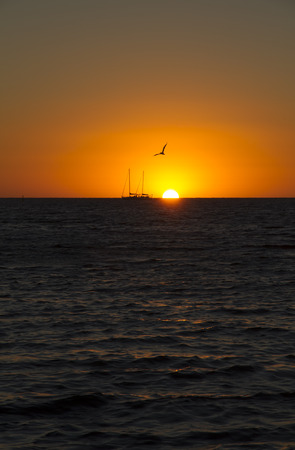 Australia,Western Australia,Perth,sailing boat and seagull at sunset on the ocean LANG_EVOIMAGES