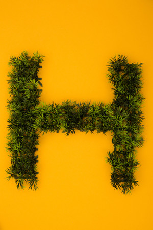 Letter H formed of plastic grass at yellow background,studio shot