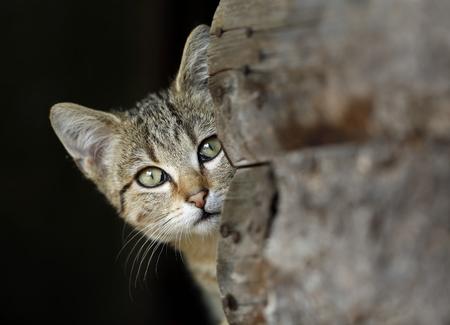 Portrait of peeking tabby cat LANG_EVOIMAGES