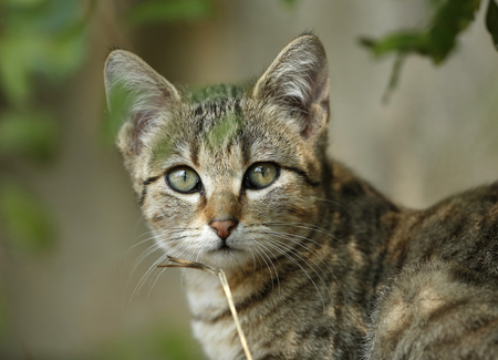 Portrait of young tabby cat LANG_EVOIMAGES