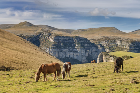 Spain,Aragon,Central Pyrenees,Ordesa y Monte Perdida National Park,Canon de Anisclo,wild horses on meadow