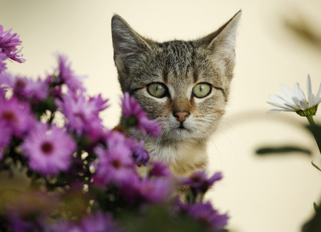 Portrait of tabby kitten in between blossoms LANG_EVOIMAGES