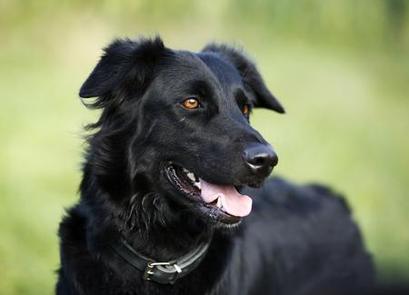 Germany, Baden-Wuerttemberg, black dog, mongrel, portrait LANG_EVOIMAGES