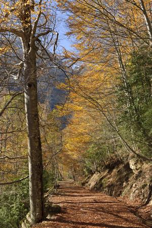 Spain, National Park Ordesa y Monte Perdido, Hiking path in the Llanos de La Larri