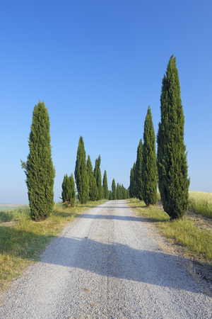 Italy, Tuscany, Siena Province, Crete Senesi, view to dirt road lined by cypress trees