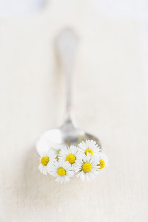 Blossoms of European Common Daisy (Bellis perennis) on spoon and wooden board