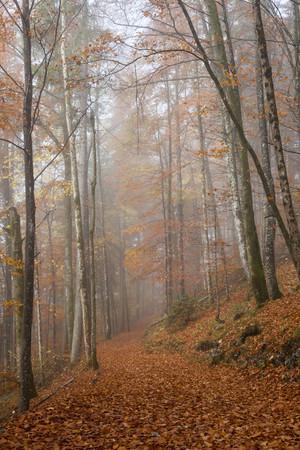 Germany, Bavaria, Upper Bavaria, Berchtesgadener Land, Berchtesgaden National Park, Schoenau at Koenigssee, fog at autumnal wood