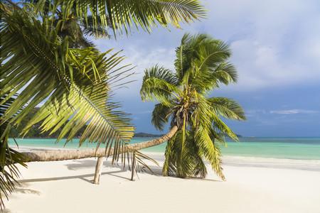 Seychelles, Praslin, Cote dOr, coco palm (Cocos nucifera) at beach of Anse Volbert