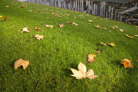 Germany, North Rhine-Westphalia, Duesseldorf, meadow with autumn leaves