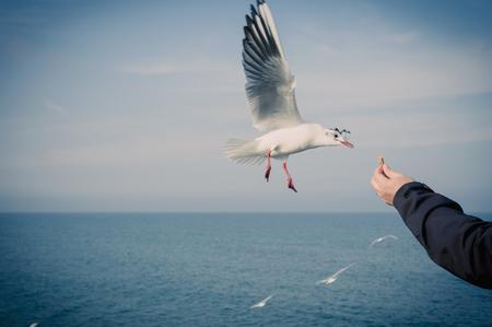 Germany, Mecklenburg-Western Pomerania, Ruegen, man feeding seagulls