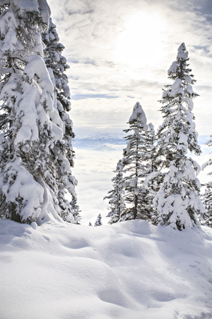 Austria, Winter forest in Alps near Kufstein