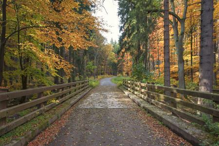 Germany, Saxony-Anhalt, Harz National Park in autumn LANG_EVOIMAGES
