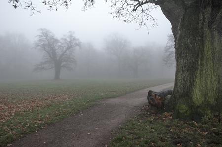 Germany, Hamburg, Jenischpark in fog LANG_EVOIMAGES