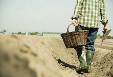 Germany, Hesse, Lampertheim, senior farmer cutting asparagus, Asparagus officinalis, partial view LANG_EVOIMAGES