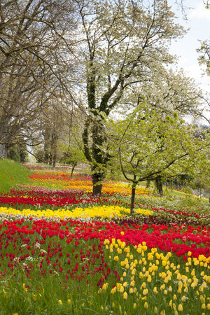 Germany, Baden-Wuerttemberg, Mainau, Blooming trees and tulips