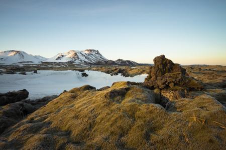 Iceland, Field of lava overgrown by moss near Dyrholaey