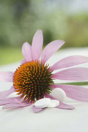 Purple coneflower, Echinacea, and three white tablets LANG_EVOIMAGES