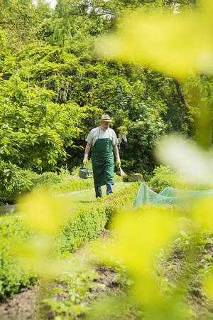 Germany, Hesse, Lampertheim, senior gardener at work LANG_EVOIMAGES