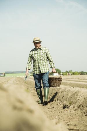Germany, Hesse, Lampertheim, senior farmer cutting asparagus, Asparagus officinalis LANG_EVOIMAGES