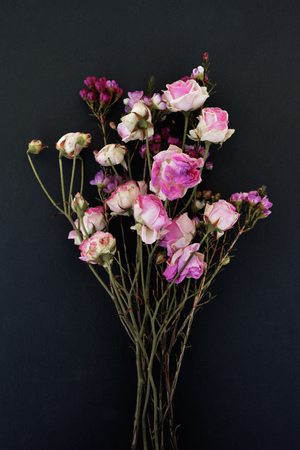 Bunch of withered flowers in front of black background LANG_EVOIMAGES
